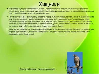 Хищники В природе у игуан большое количество врагов— среди нихястребыи дру...