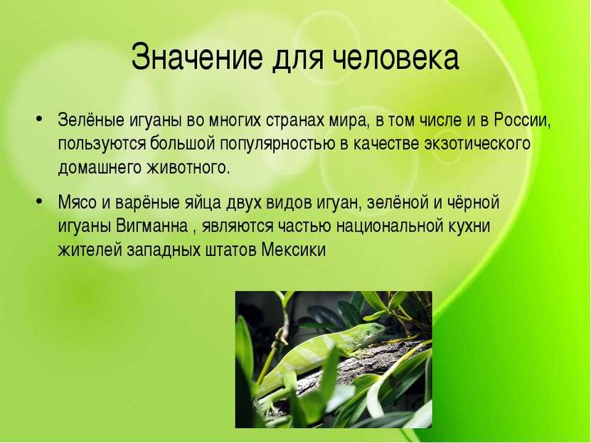 Значение для человека Зелёные игуаны во многих странах мира, в том числе и в...