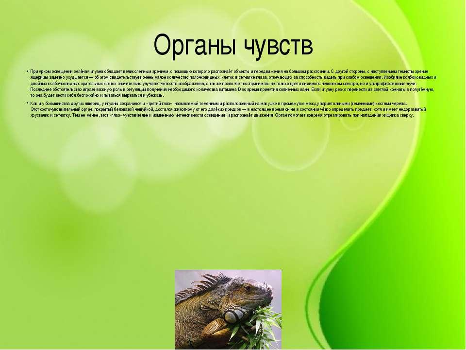 Органы чувств При ярком освещении зелёная игуана обладает великолепным зрение...