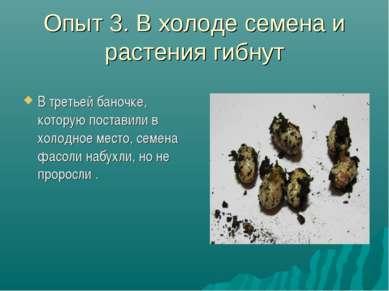 Опыт 3. В холоде семена и растения гибнут В третьей баночке, которую поставил...