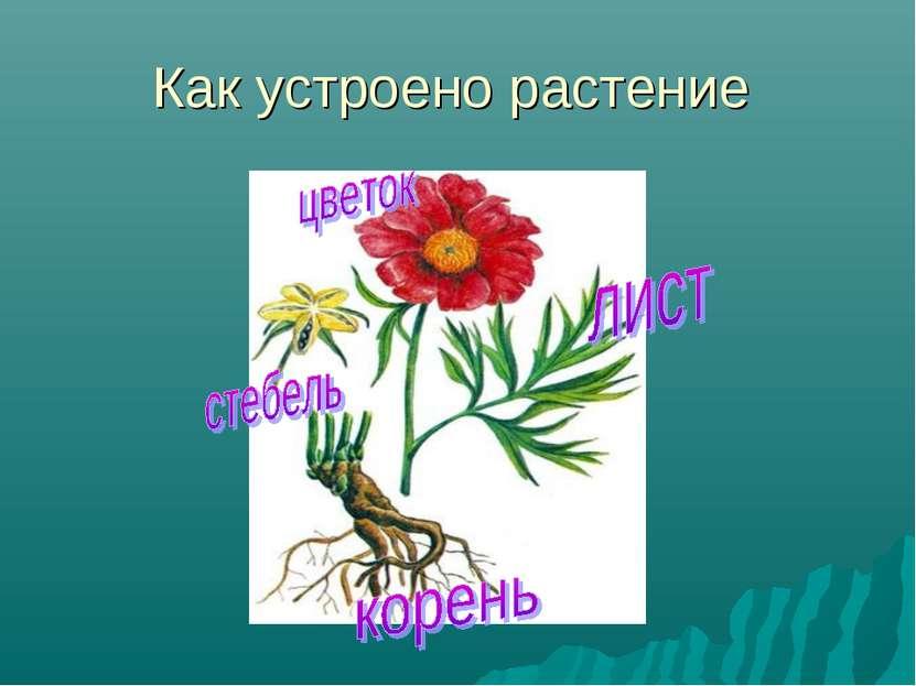 Как устроено растение