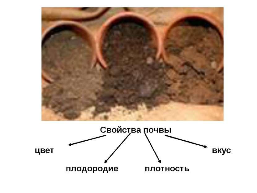 Свойства почвы цвет вкус плодородие плотность