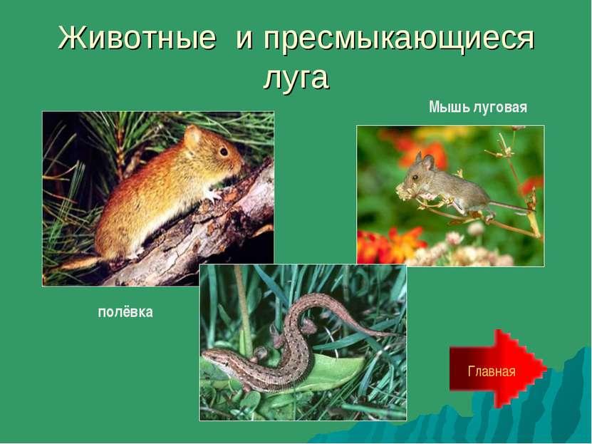 Животные и пресмыкающиеся луга Главная полёвка Мышь луговая
