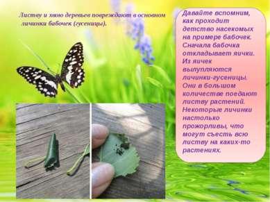 Листву и хвою деревьев повреждают в основном личинки бабочек (гусеницы). Дава...