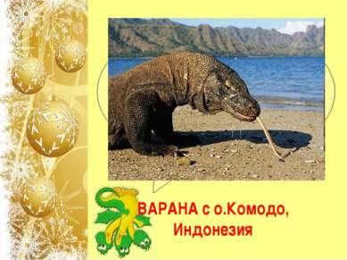"Какое животное называют ""Дракон Комодо""? ВАРАНА с о.Комодо, Индонезия"