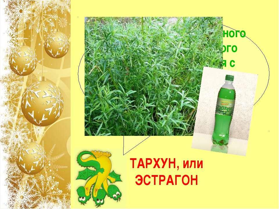 Название какого известного пряного, лекарственного растения переводится с лат...