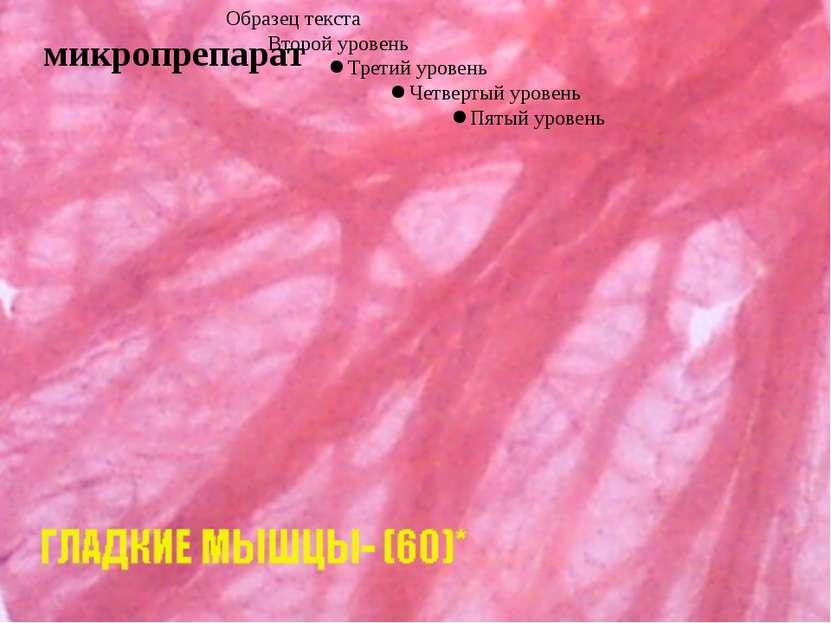 Мышечная ткань - ткань, состоящая из клеток мезодермального происхождения, сп...