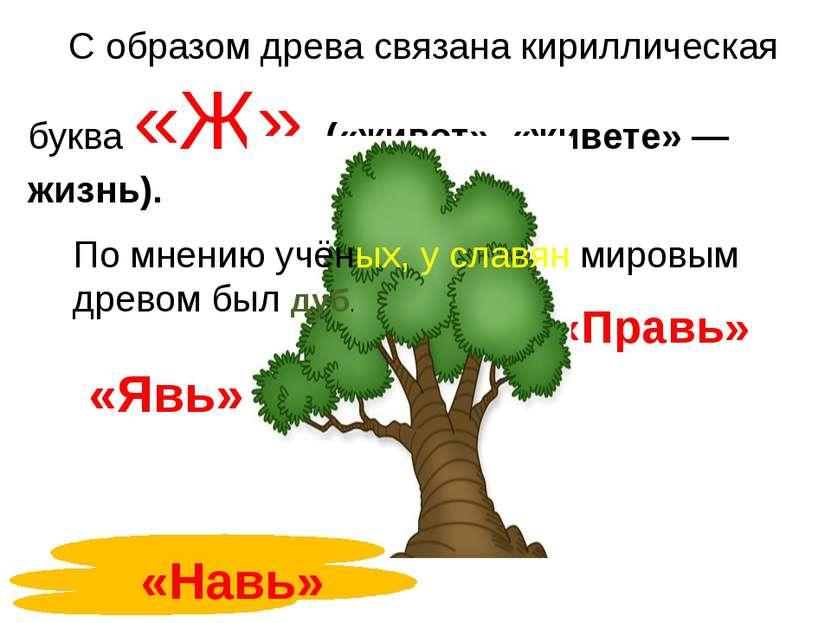 С образом древа связана кириллическая буква «Ж» («живот», «живете» — жизнь). ...