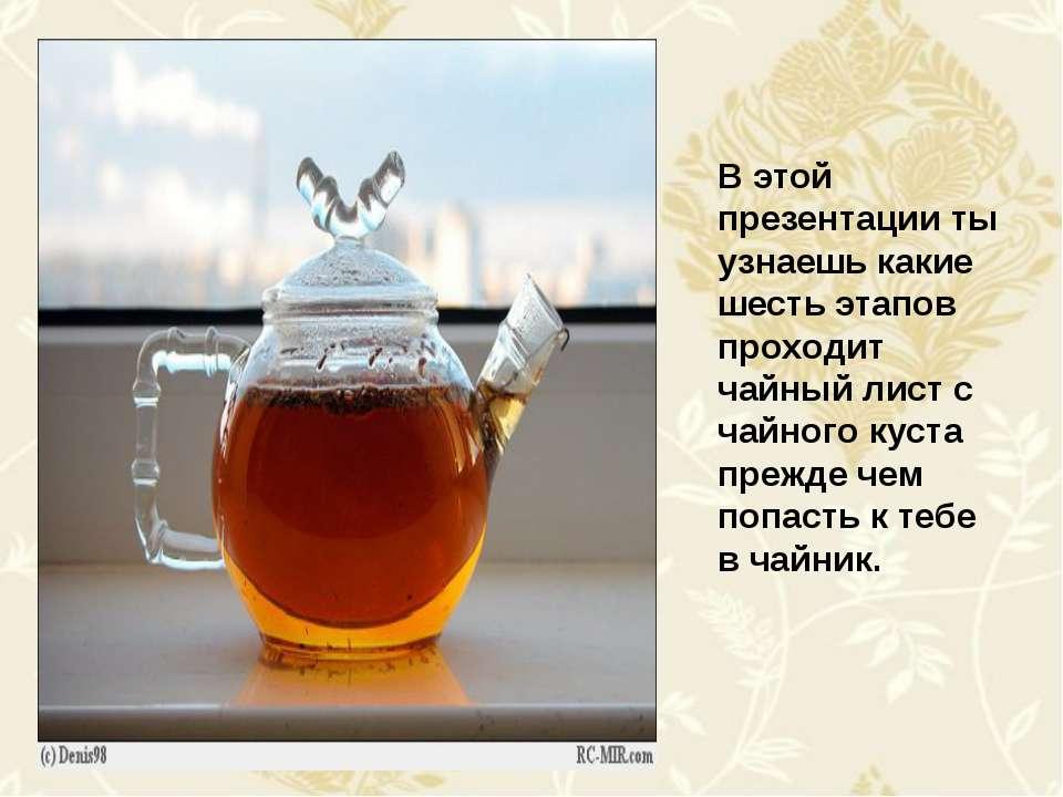 В этой презентации ты узнаешь какие шесть этапов проходит чайный лист с чайно...