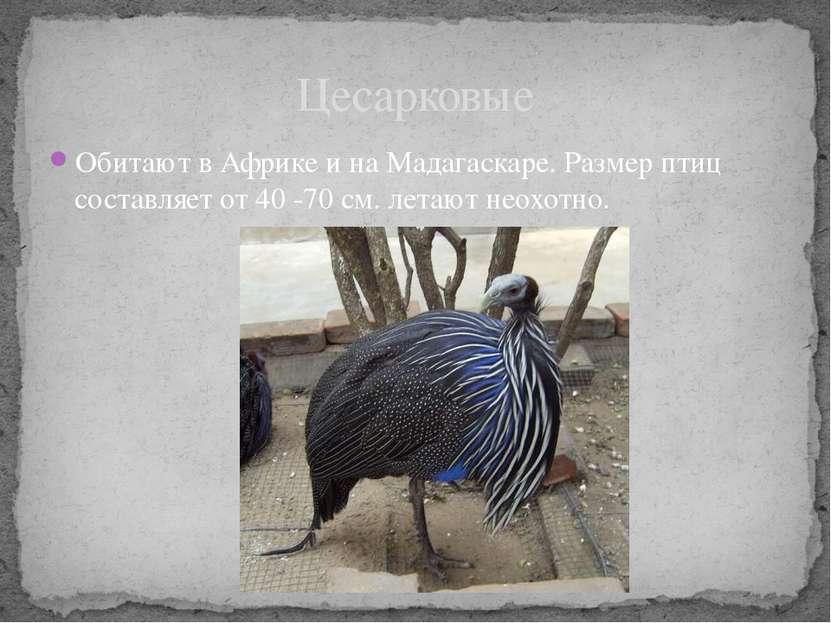 Обитают в Африке и на Мадагаскаре. Размер птиц составляет от 40 -70 см. летаю...