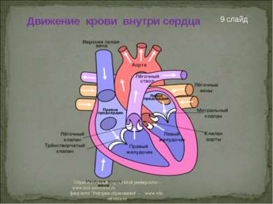 Движение крови внутри сердца 9 слайд Образовательный портал Мой университет -...
