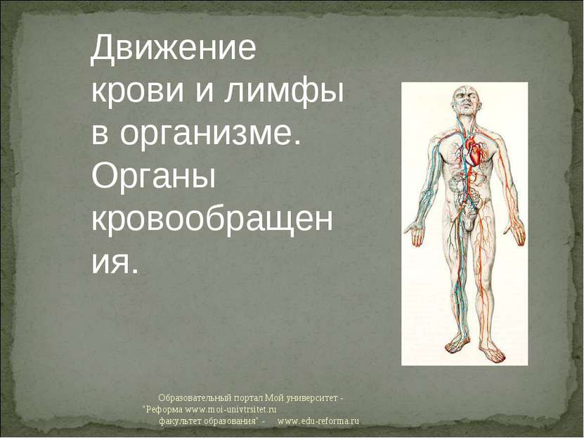 """Образовательный портал Мой университет - """"Реформа www.moi-univtrsitet.ru факу..."""