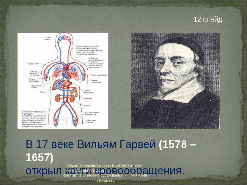 В 17 веке Вильям Гарвей (1578 – 1657) открыл круги кровообращения. 12 слайд О...