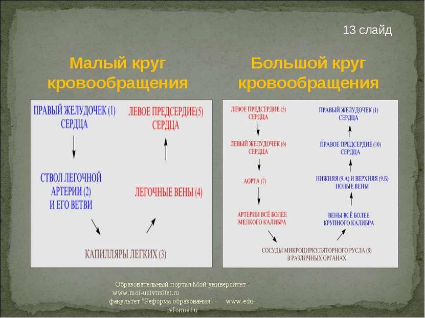 Малый круг кровообращения 13 слайд Большой круг кровообращения Образовательны...
