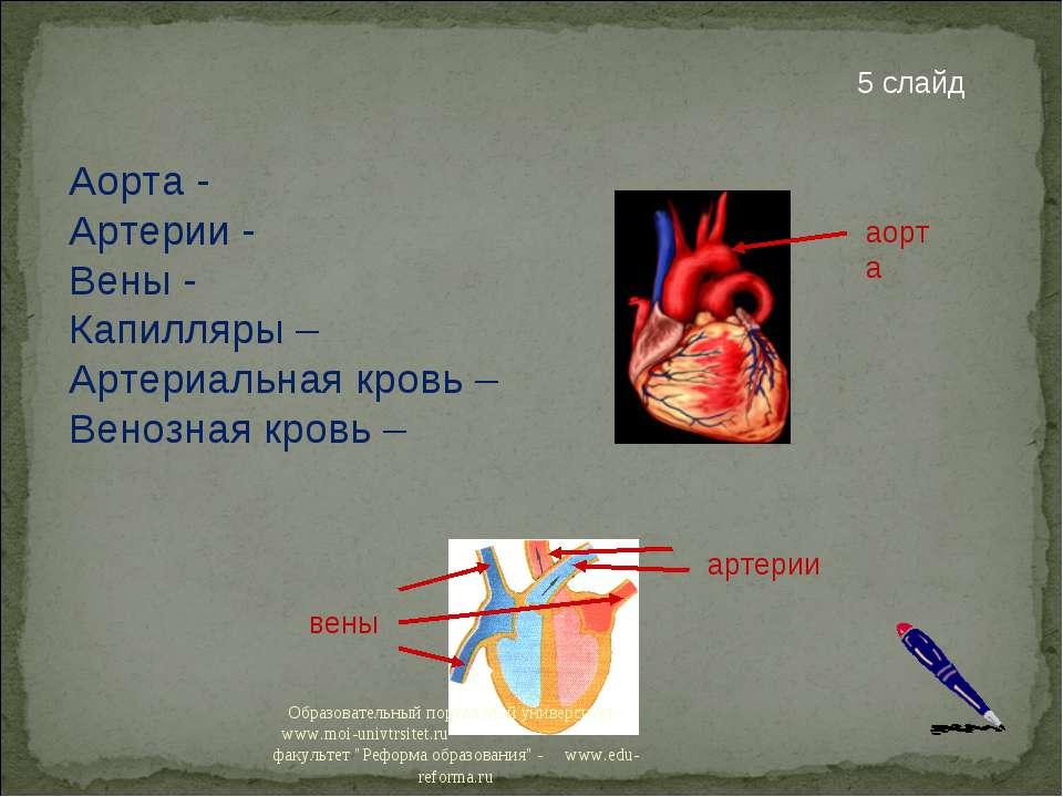 Аорта - Артерии - Вены - Капилляры – Артериальная кровь – Венозная кровь – 5 ...