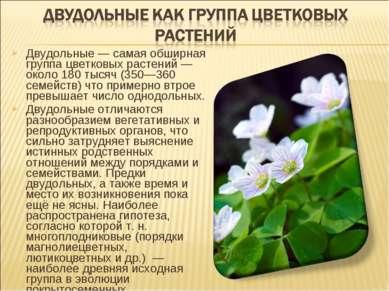 Двудольные — самая обширная группа цветковых растений — около 180 тысяч (350—...