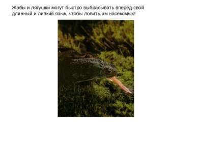 Жабы и лягушки могут быстро выбрасывать вперёд свой длинный и липкий язык, чт...