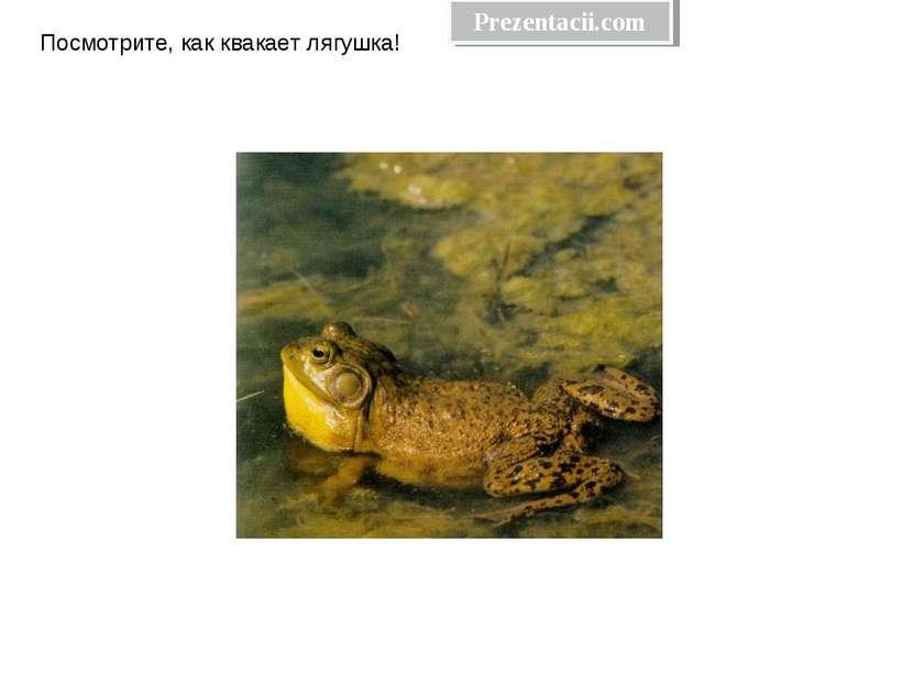 Посмотрите, как квакает лягушка! Prezentacii.com
