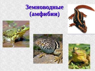 Земноводные (амфибии)