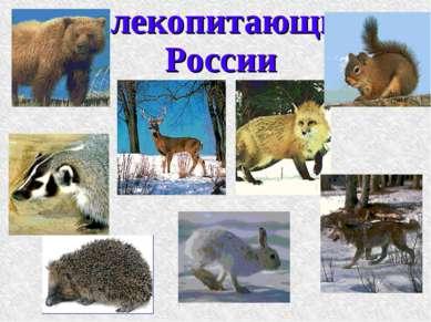Млекопитающие России
