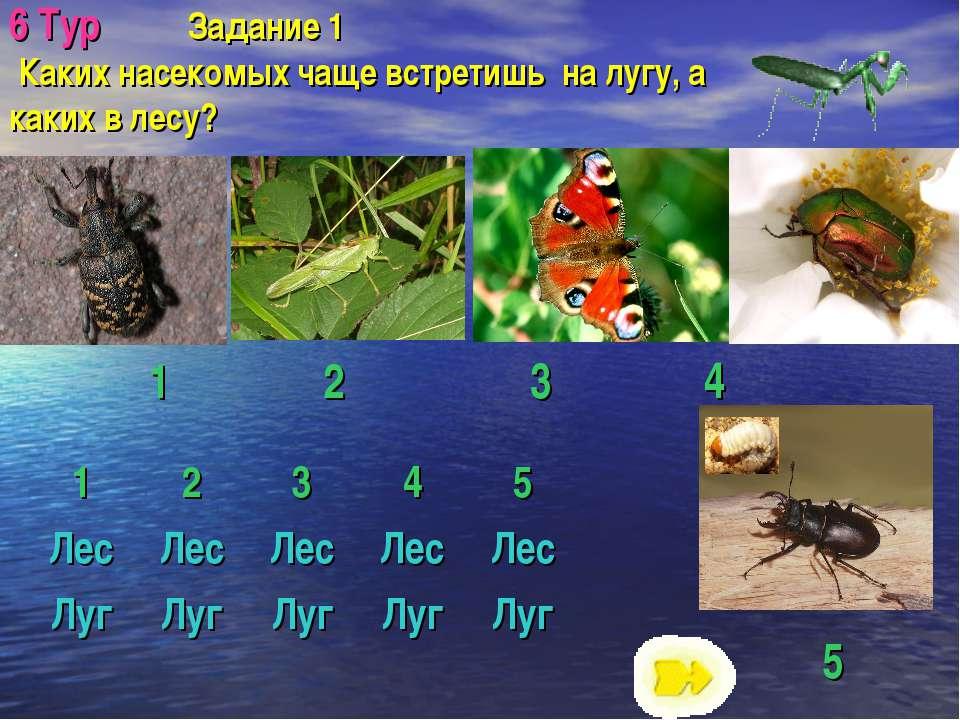 6 Тур Задание 1 Каких насекомых чаще встретишь на лугу, а каких в лесу? 5 1 2...