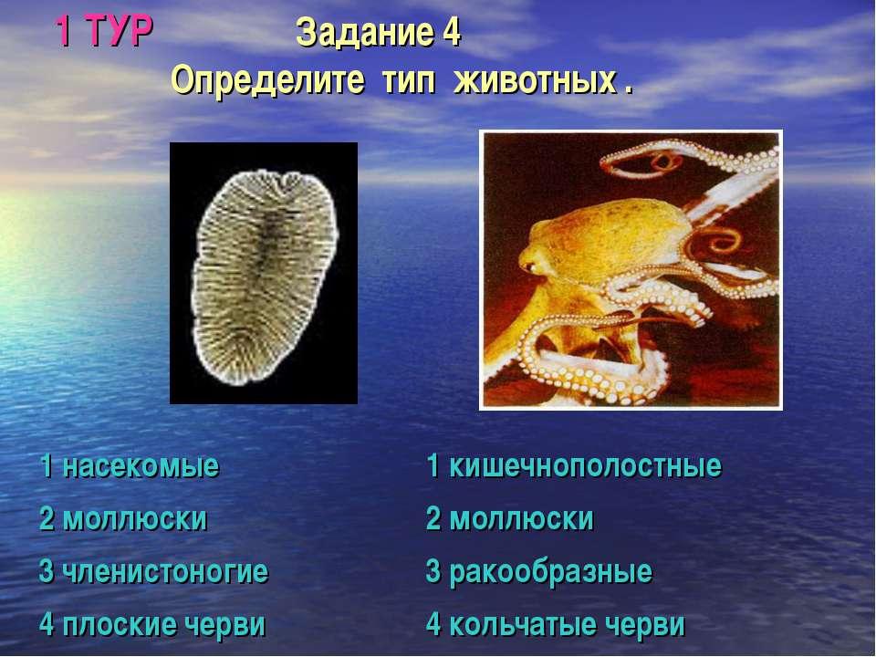 1 ТУР Задание 4 Определите тип животных .