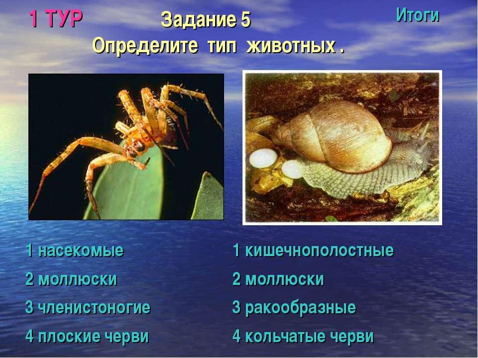 1 ТУР Задание 5 Определите тип животных . Итоги