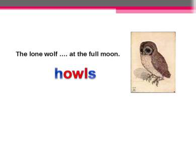 The lone wolf …. at the full moon.