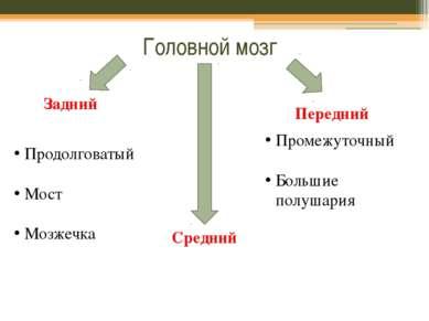 Головной мозг Задний Средний Передний Продолговатый Мост Мозжечка Промежуточн...
