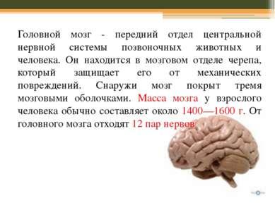 Головной мозг - передний отдел центральной нервной системы позвоночных животн...