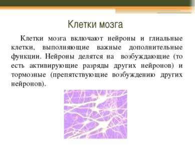 Клетки мозга Клетки мозга включают нейроны и глиальные клетки, выполняющие ва...