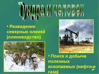 Разведение северных оленей (оленеводство) Поиск и добыча полезных ископаемых ...
