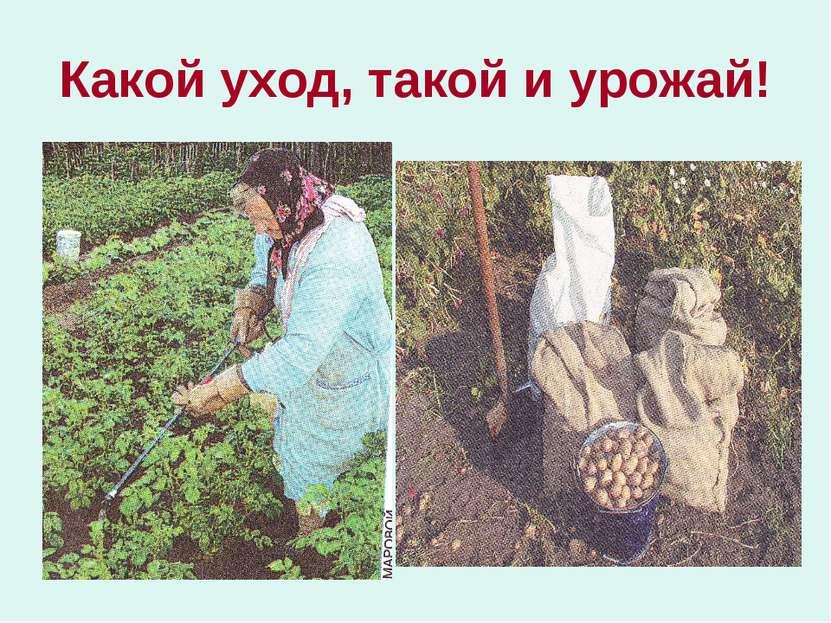 Какой уход, такой и урожай!