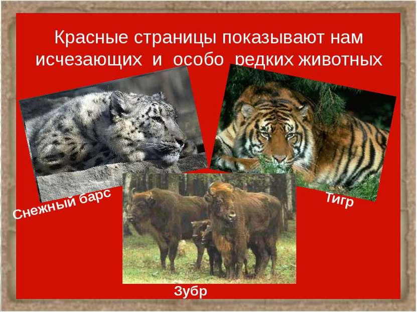 Красные страницы показывают нам исчезающих и особо редких животных Снежный ба...