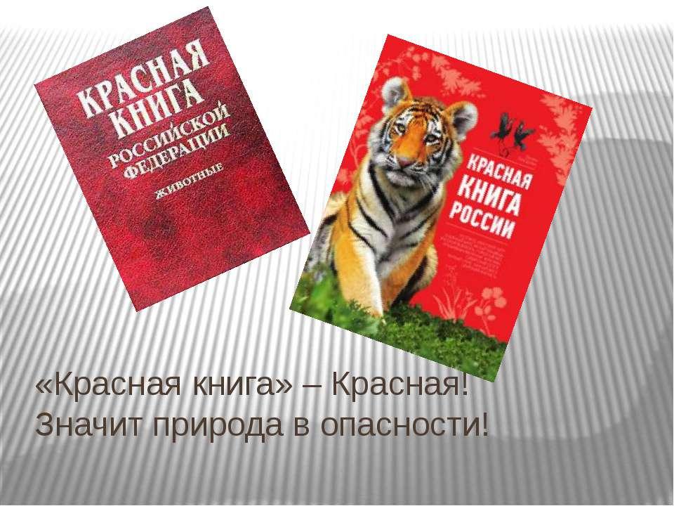«Красная книга» – Красная! Значит природа в опасности!