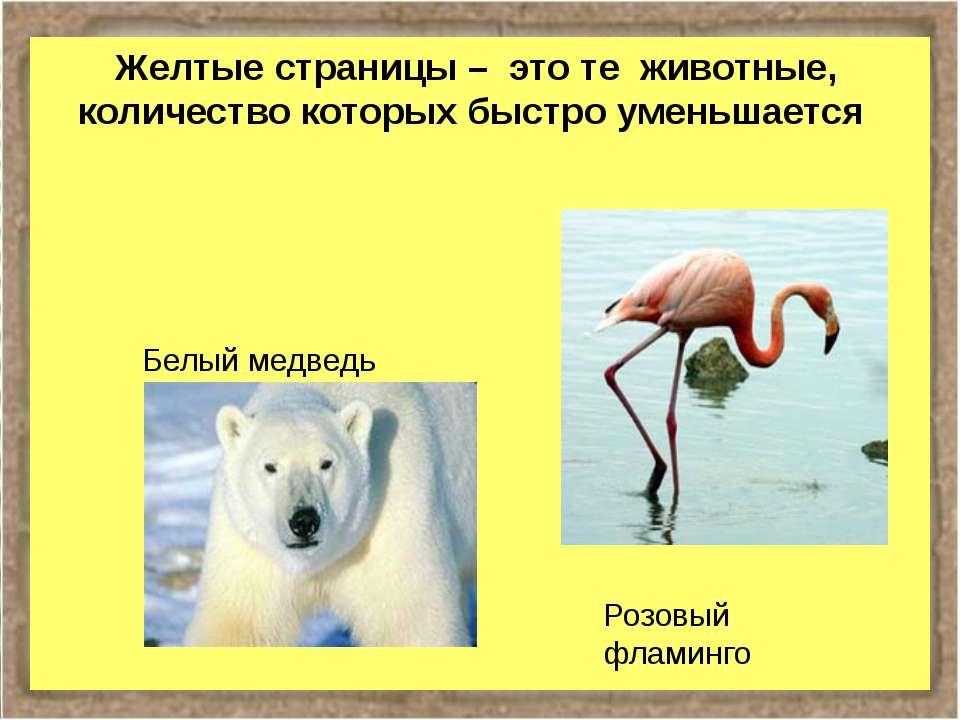 Желтые страницы – это те животные, количество которых быстро уменьшается Розо...