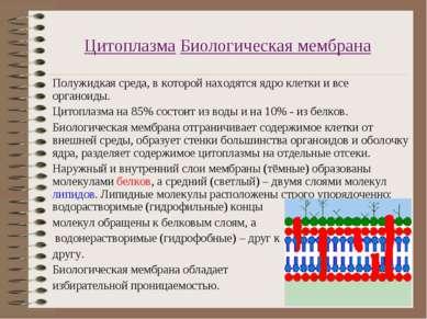 Цитоплазма Биологическая мембрана Полужидкая среда, в которой находятся ядро ...