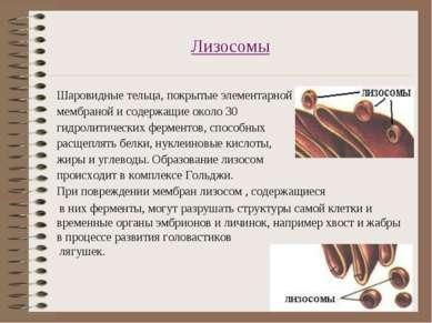 Лизосомы Шаровидные тельца, покрытые элементарной мембраной и содержащие окол...