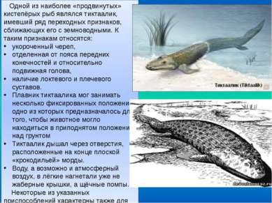 Одной из наиболее «продвинутых» кистепёрых рыб являлся тиктаалик, имевший ряд...
