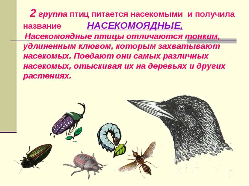 2 группа птиц питается насекомыми и получила название НАСЕКОМОЯДНЫЕ. Насекомо...