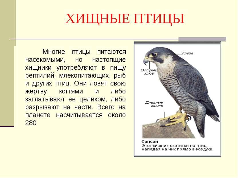 ХИЩНЫЕ ПТИЦЫ Многие птицы питаются насекомыми, но настоящие хищники употребля...