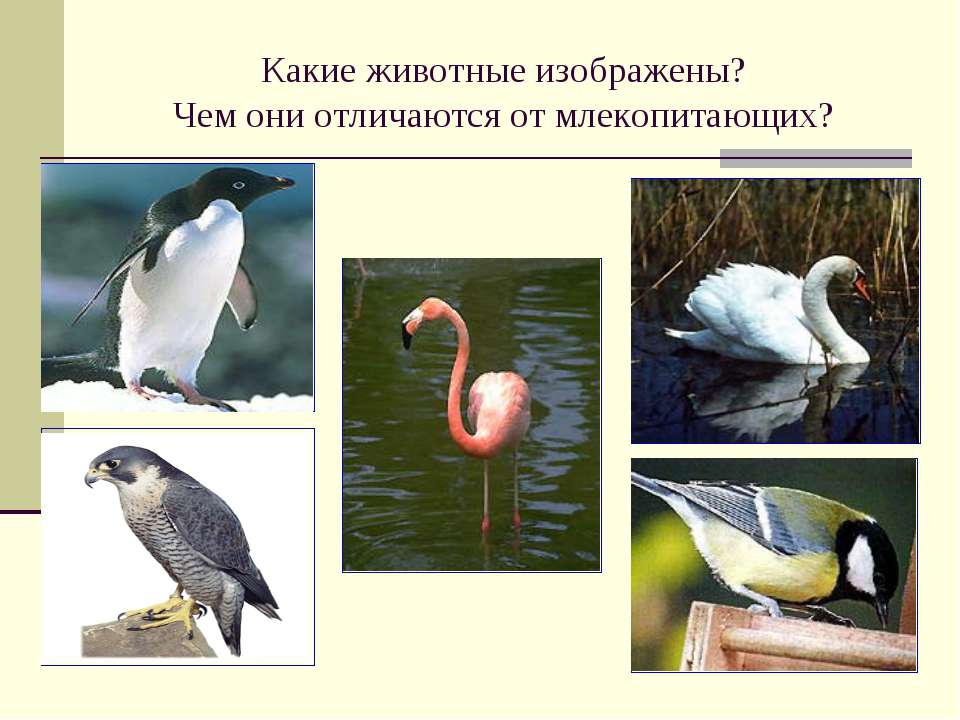 Какие животные изображены? Чем они отличаются от млекопитающих?