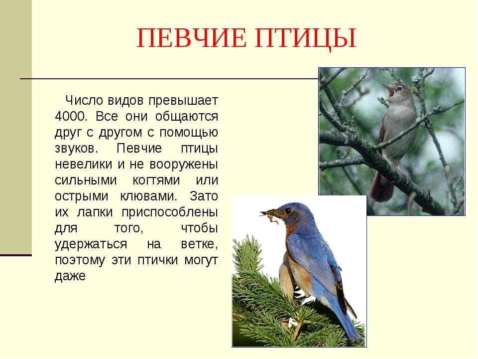 ПЕВЧИЕ ПТИЦЫ Число видов превышает 4000. Все они общаются друг с другом с пом...