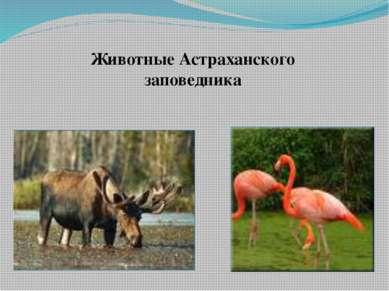 Животные Астраханского заповедника Животные Астраханского заповедника