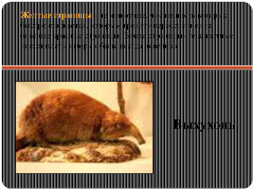 Желтые страницы – те животные, численность которых быстро снижается, которым ...