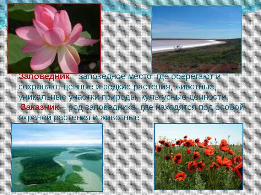 Заповедник – заповедное место, где оберегают и сохраняют ценные и редкие раст...