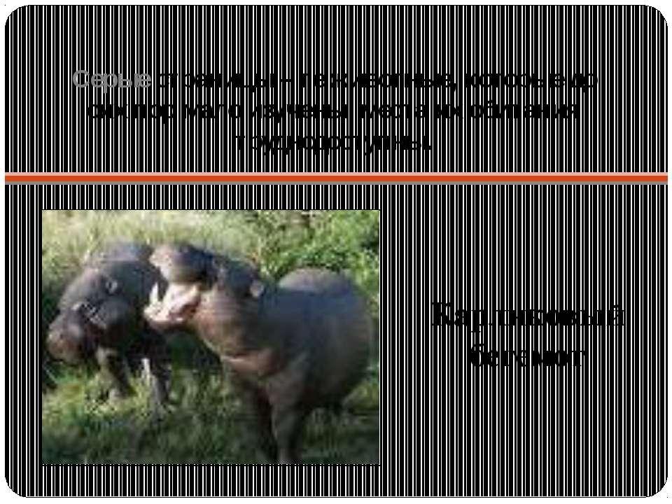 Серые страницы – те животные, которые до сих пор мало изучены, места их обита...