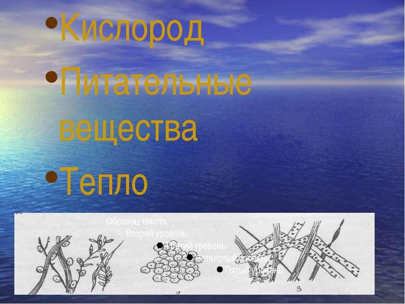Кислород Питательные вещества Тепло