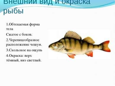 Внешний вид и окраска рыбы 1.Обтекаемая форма тела Сжатое с боков. 2.Черепице...