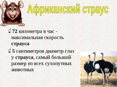 72километра в час - максимальная скорость страуса 5сантиметров диаметр глаз...